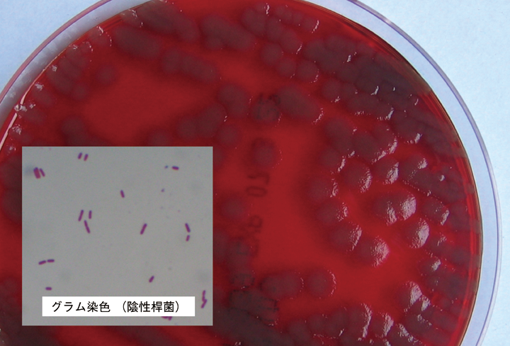 微生物学研究室