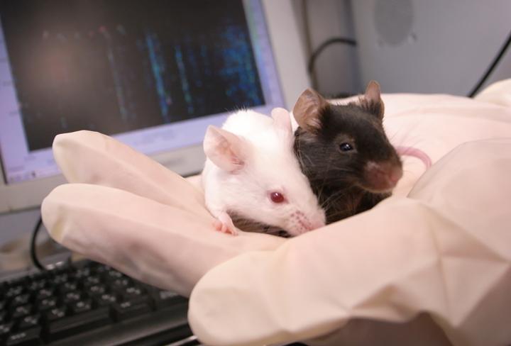伴侶動物学研究室