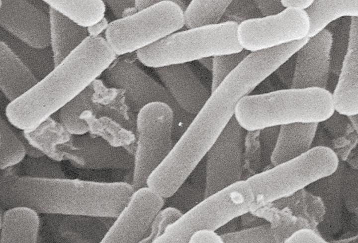 微生物学第一研究室