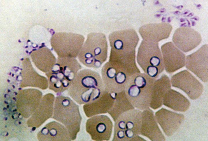 伝染病学研究室