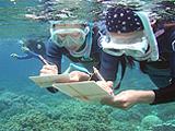スタディツアーの様子。インドネシア・スラウェシ島のサンゴ礁、生態観察。