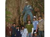スタディツアーの様子。タスマニアの原生林、ユーカリの老齢巨木の前で。