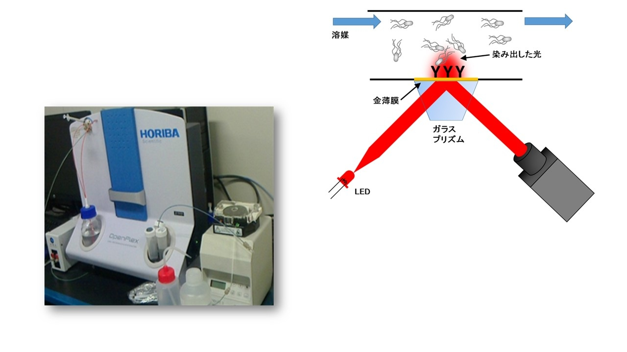 表面プラズモン共鳴(SPR)の装置と原理