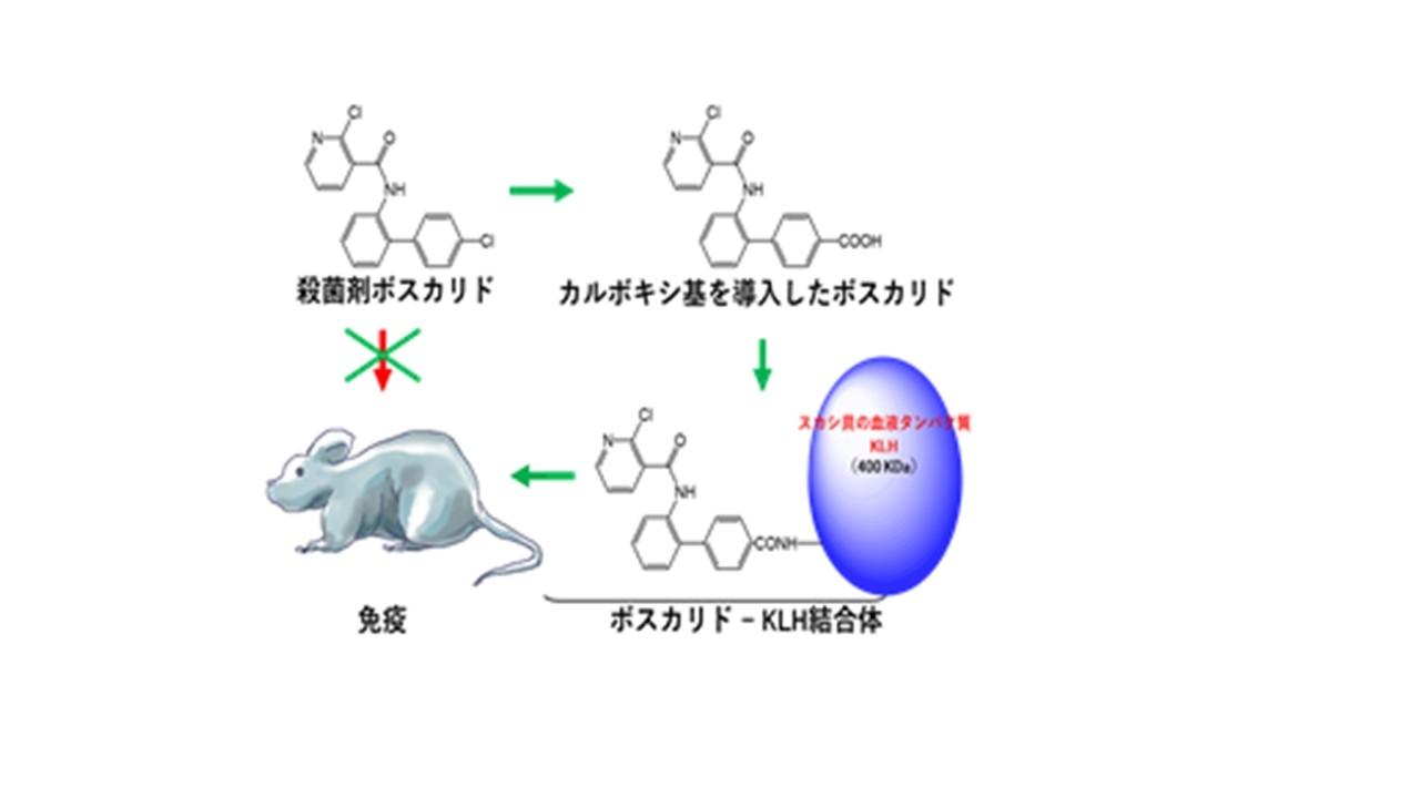 農薬を検出するための実験方法の一部