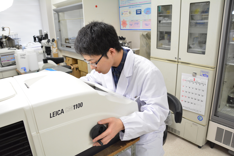 免疫組織化学的手法による実験