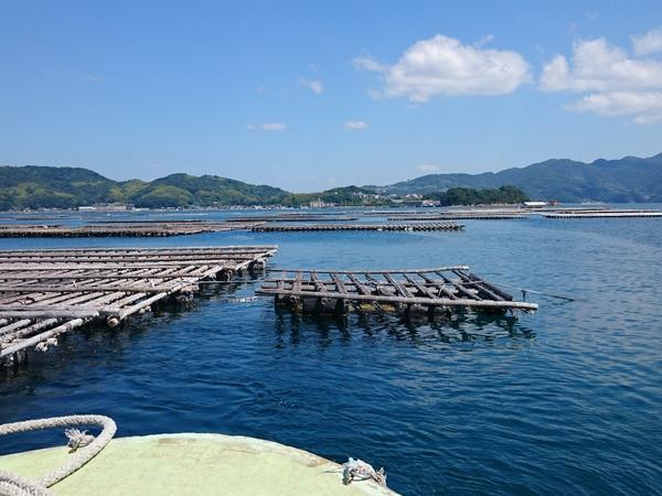 広島県呉沖に、実験専用のマガキ養殖筏を作ってもらいました。