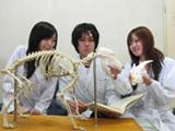 犬の頭蓋骨と山羊の頭蓋骨を見て、動物種による構造上の違いについて学ぶ。