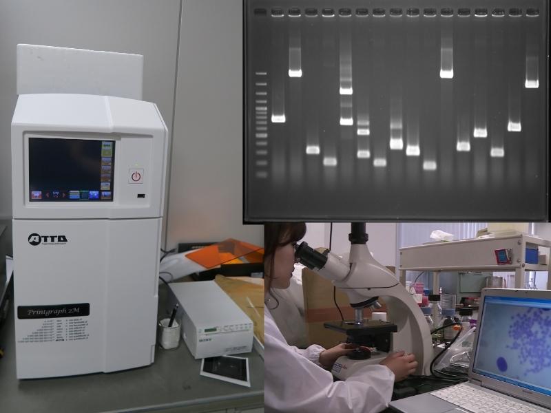 泳動装置(DNA増幅確認)