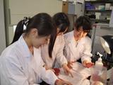 乳房炎乳汁の細菌培養検査を行い、原因菌を分離・同定している様子